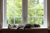保護猫の記録③ - 小さな森のキキとサラ