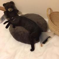 保護猫の記録④ - 小さな森のキキとサラ