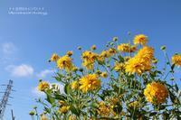 暑くても花咲いていると散歩が出来ます(^^♪ - 自然のキャンバス