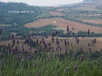 lavender@イタリア旅行 - アリスのトリップ