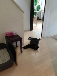 行き倒れる猫たち。 - Kepponen