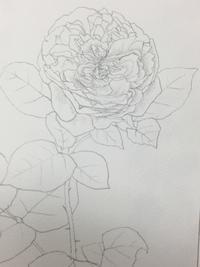 薔薇。 - 『一日一畫』 日本画家池上紘子