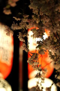 祇園祭 後祭 宵々山 - Gallery I