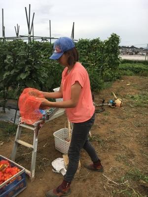 土日祭日になると 畑作業をお手伝い下さる SさんMさん -  鎌倉オステリアジョイア 日々の自家畑作業&収穫した野菜の料理をUPしていきます