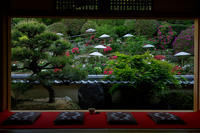 護念院の春景色(當麻寺塔頭) - 花景色-K.W.C. PhotoBlog