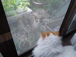 これ、何の木、、、 - 猫将軍のミューと、あんなこと、こんなこと、、、。
