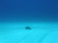 2012.07 奄美 The 2nd day The 2nd Dive - ランゲルハンス島の海