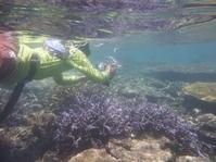 大サンゴ群に魅せられて ~糸満近海シュノーケリング~ - 沖縄本島最南端・糸満の水中世界をご案内!「海の遊び処 なかゆくい」