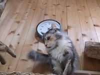 ドストエフスキー「白痴」 - ネコと文学と猫ブンガク