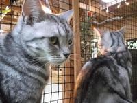 フォークナー「サンクチュアリ」 - ネコと文学と猫ブンガク