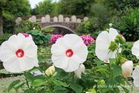 ブログ仲間と♪みずの森&琵琶湖博物館へ - 「古都」大津 湖国から