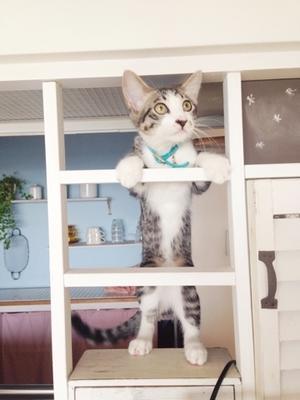 猫、脱走。 - Small daily life