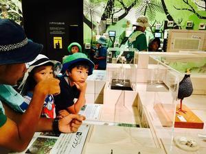 はじめてのキャンプ〔2日目〕冒険の最後はウフギー自然館を見学して、やんばるの生き物についてもっと知ろう!さぁ、帰る時間だ! - ねこんちゅ通信(ネコのわくわく自然教室)