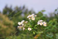 7/24 引きこもりガーデナー - 「あなたに似た花。」