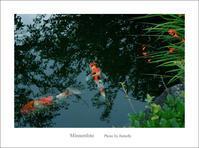 鯉を呼ぶ - Minnenfoto