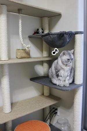 猫をやる気にさせる!・・と桃のコンポート。 - Living with Cats*