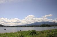 河口湖:大石公園 - 都忘れと忘れな草