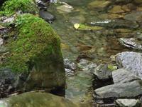 渓流のヤブサメ - 季節の映ろひ