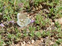 草原の風に翔ぶ蝶を追って(その9) - 不思議の森の迷い人