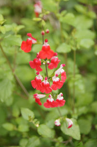自宅の花で7色♪【5月撮影】 - DOUBLE RAINBOW