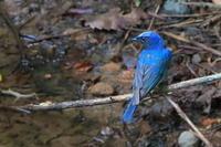 今季は野鳥の出が悪い - 上州自然散策2