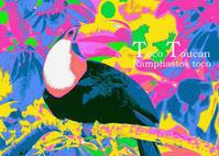 オニオオハシ:Toco Toucan - 動物園の住人たち写真展