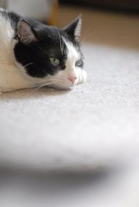 アンニュイな午后 - Black Cat Moan
