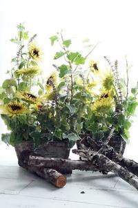 レモンエクレアはスイーツではありません(^^♪ - お花に囲まれて