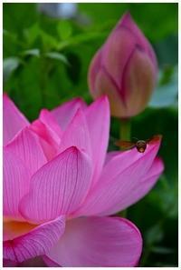 神聖な花 -  one's  heart