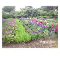 そこを通る誰かのために - Garden Diary
