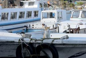沖島の猫たち -