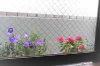 窓から見える花達 - 空色のココロ~小さな幸せを探して~