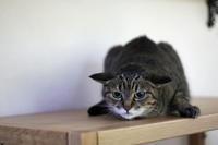 保護猫の記録⑤ - 小さな森のキキとサラ