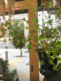 【ドウダンツツジ】枝ものつかいで涼し気に - ルーシュの花仕事