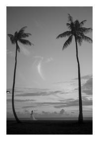 Hawaii#7 - VELFIO