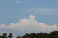 夏雲とポーチュラカ - 猪こっと猛進