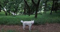 避暑地 - 小太郎の白っぽい世界