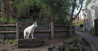 Vol.1212 三ツ沢南町公園 - 小太郎の白っぽい世界
