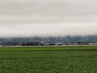 霧とおっさん犬 - きつねこぱん