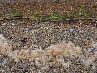 【海で拾った石】大雨の日の石拾い - azukki的.
