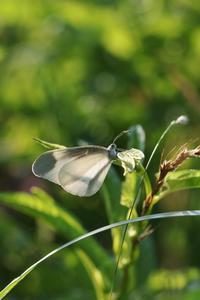 ウラキン不調に終わる - 蝶超天国