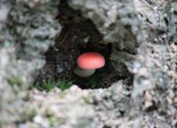 万願寺の森で道草友達とキノコをウォッチ! - 万願寺通信