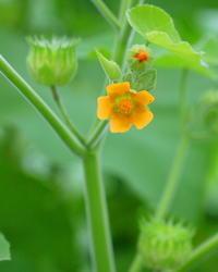 高崎郊外で花とチョウ - 星の小父さまフォトつづり