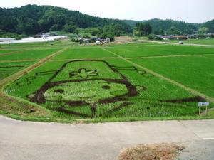 今年の角田市の田んぼアートは! - カブに始まりカブに終わる