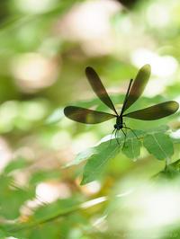 翅が咲く - M2_pictlog