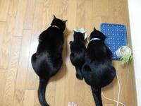 まるちゃん(仮名) - 愛犬家の猫日記