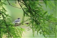 緑地公園にて vol.12 - 今日のいちまい