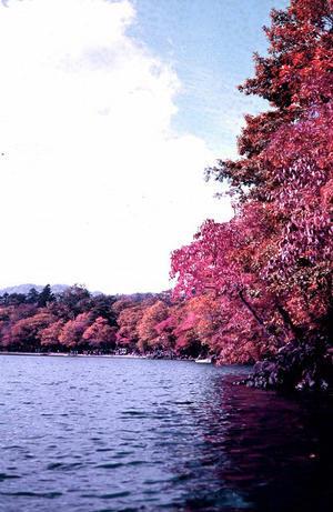 熊野の旅 エカテリーナ - LUZの熊野古道案内