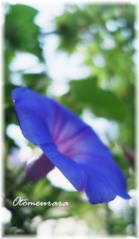 BLUE - 日々楽しく ♪mon bonheur