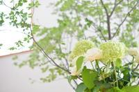 Wedding Photo!T&Y - アーマ・テラス   ウエディングブログ